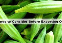 Okra Export India